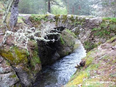 Tejos Milenarios de Valhondillo -Tejos de Rascafría; rutas trekking madrid;foros senderismo